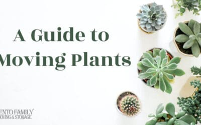 A Guide to Moving Plants